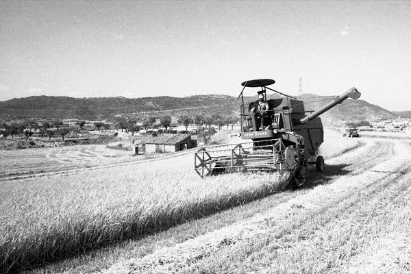 05.07.1986 Segant a la vinya, també fa dies  Torà -  Ramon Sunyer