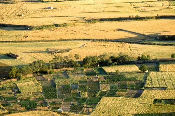 05.07.1986 Vista dels camps de cereals des de l'Aguda  Torà -  Ramon Sunyer