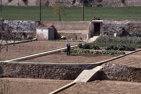 12.06.2010 Cultivant l'hort   Torà -  Ramon Sunyer