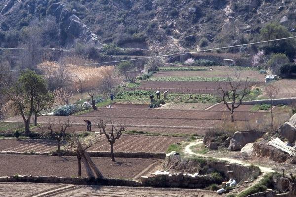 12.06.2010 El cultiu de l'hort   Torà -  Ramon Sunyer
