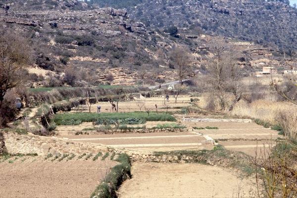 12.06.2010 Actualment la majoria d'aquests horts ja no es cultiven   Torà -  Ramon Sunyer