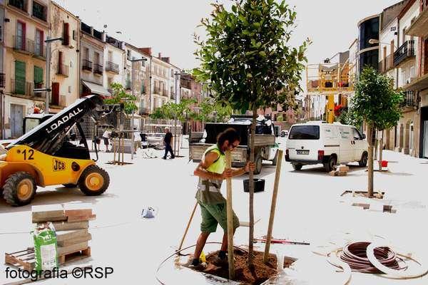 Plantant els darrers arbres - Torà
