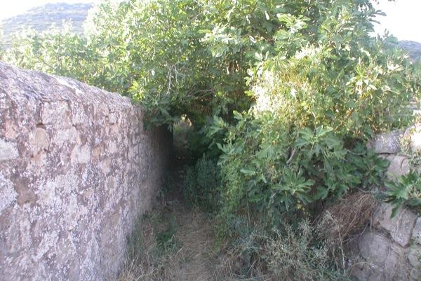23.08.2010 Camí entre vegetació  Torà -  Ramon Sunyer