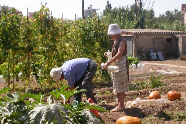 30.08.2010 Els hortolans  Torà -  Ramon Sunyer