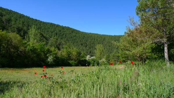 25.04.2010 Vall del riu llanera. Un indret ple de colors i llum  Llanera -  Xavier Sunyer