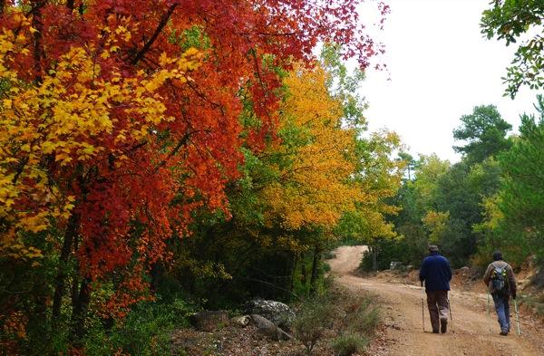 25.04.2010 Riu llanera. Caminar durant la tardor vora el riu és molt recomanable per l'exhuberància del entorn  Llanera -  Xavier Sunyer