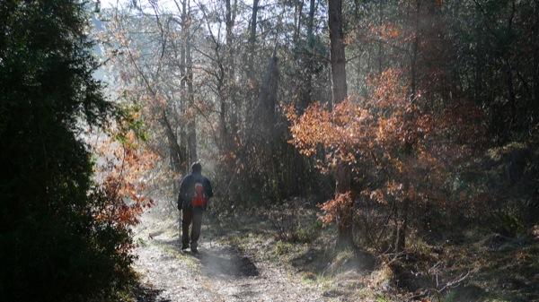 05.04.2009 Riu Llanera. Els boscos de ribera són pins i roures.  Llanera -  Xavier Sunyer