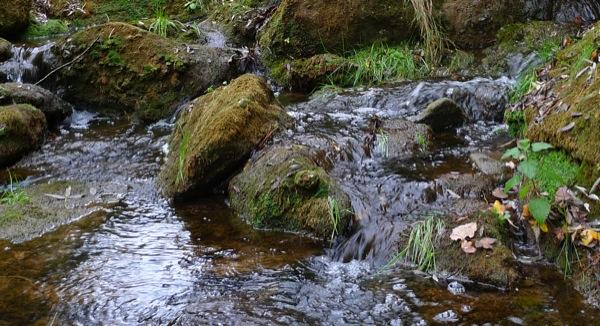 25.10.2009 Riu Llanera. Si quelcom te aquest riu és aigua.... molta aigua.  Llanera -  Xavier Sunyer