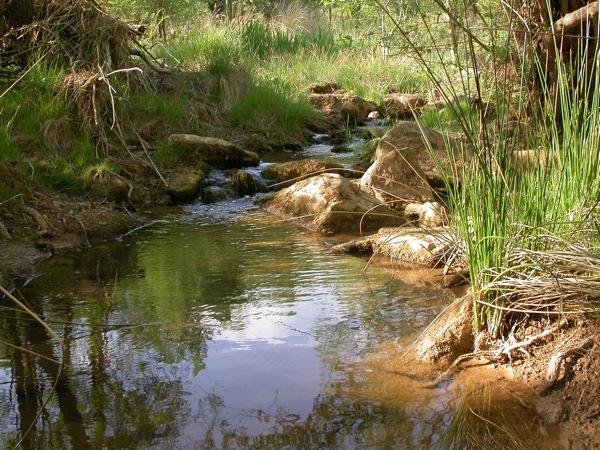 08.05.2005 El riu Llanera  Fontanet -  Ramon Sunyer