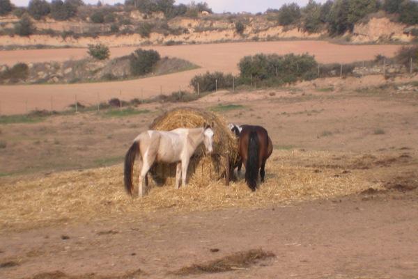 12.06.2011 Cavalls  Sant Serni -  Ramon Sunyer