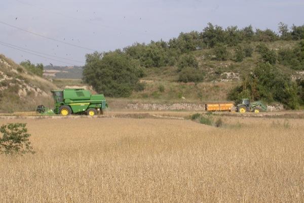 25.06.2011 Els falciots sempre presents  Torà -  Ramon Sunyer