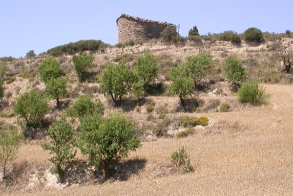 27.06.2011 Capella Sant Pere de Murinyols  201 - Autor Ramon Sunyer