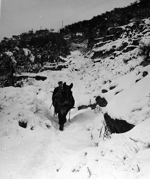01.01.1971 pagès amb el matxo passant pel camí nevat  L'Aguda -  xavier sunyer