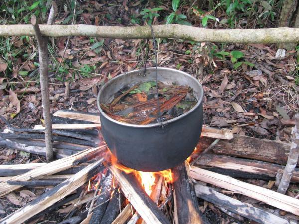 La decocció de les diferents plantes es preparada pels xamans  -