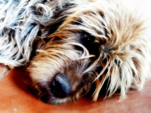 L'associació futur animal vetlla pels animals -
