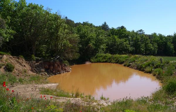 25.05.2013 25 maig. bassa dels vedells de Llanera  -  Xavier