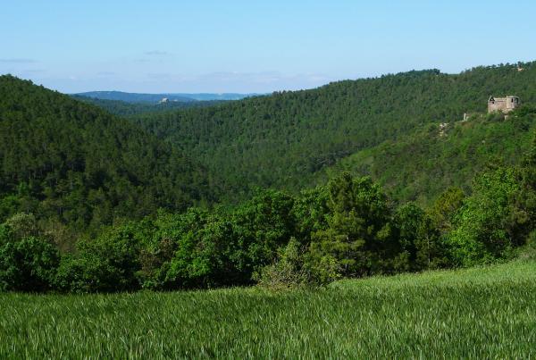 25.05.2013 Vall de Llanera  -  Xavier