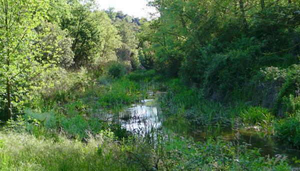 25.05.2013 25 maig.riu Llanera. Toll de l'Amic  -  Xavier