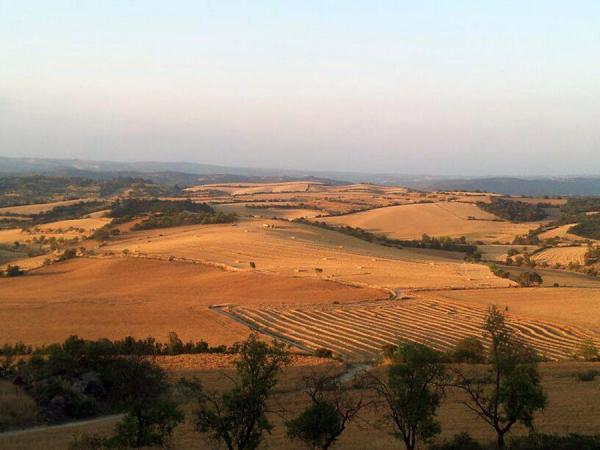 13.07.2013 Els camps de cereals vistos des de Massoteres a Torrefeta  Massoteres -  Josep Vilaró