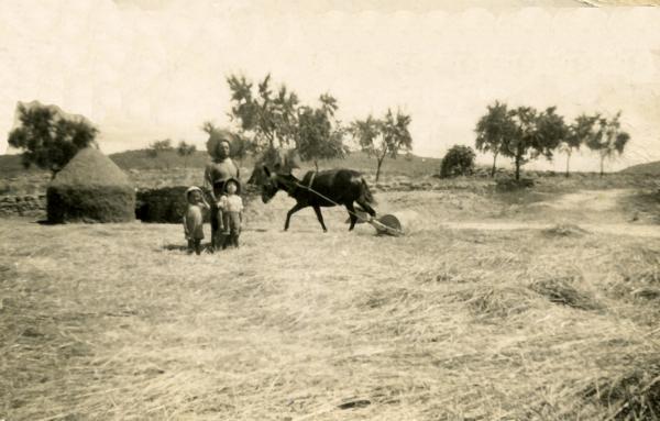 22.07.1946 Ramon Sunyer Ribera, Isidre Sunyer Querol (fill) i Miquel Sunyer (nebot) batent a l'era de les Torrovelles  Torà -  Miquel Sunyer