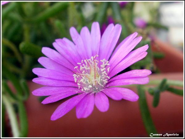 16.09.2013 Flora i fauna  -  Carmen Aparicio