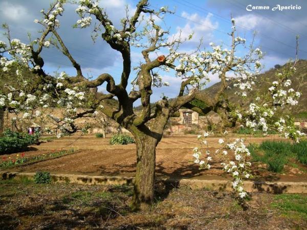 16.09.2013 Perer centenari mes de 100 anys de l'hort del Joan  Torà -  Carmen Aparicio