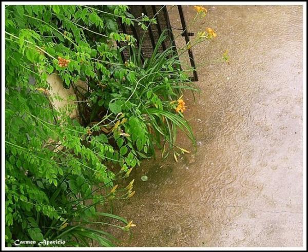 16.09.2013 pluja  -  Carmen Aparicio