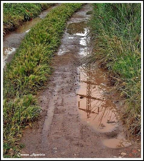 16.09.2013 Després de la pluja, camí dels horts  -  Carmen Aparicio