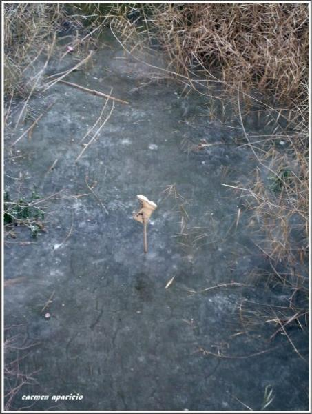 17.09.2013 El riu gelat  Torá -  Carmen Aparicio