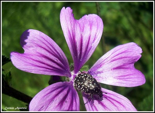 18.09.2013 Flora i fauna  -  Carmen Aparicio