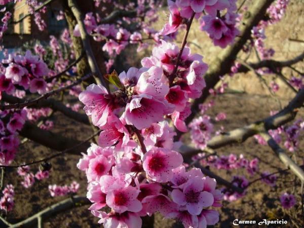 18.05.2013 La primavera  Torà -  Carmen Aparicio