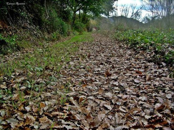 27.09.2013 La Tardor, camí dels horts  -  Carmen Aparicio