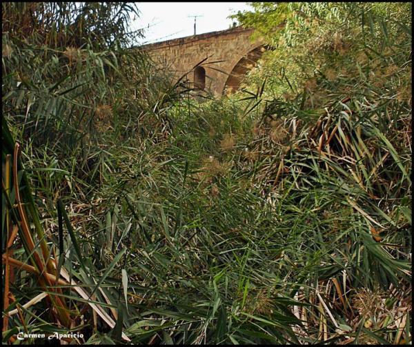 10.10.2013 El riu Llanera abans de netejar  Torà -  Carmen Aparicio