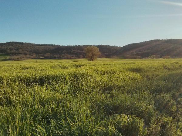 07.04.2014 Els sembrats a la primavera  Torà -  Ramon Sunyer