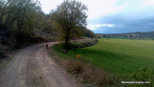 27.04.2014   -  Josep Gatnau