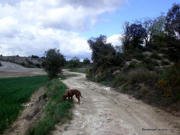 28.04.2014   -  Josep Gatnau