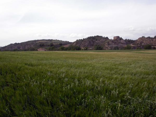 12.05.2014 sembrats a la primavera  -  Ramon Sunyer