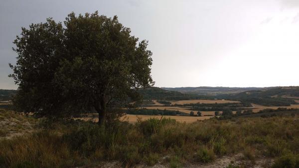 07.07.2014 l'alzinera contempla la vall del Llobregós  Biosca -  Ramon Sunyer
