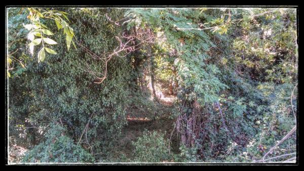 14.08.2014 vegetació de ribera  Torà -  Ramon Sunyer
