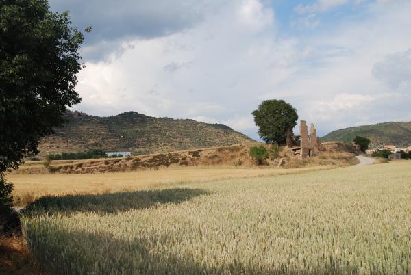 31.05.2015 els blats  Torà -  Ramon Sunyer