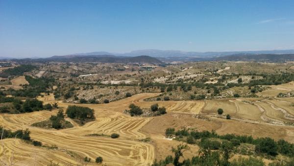 21.06.2015 els camps segats  L'Alzina -  Ramon Sunyer