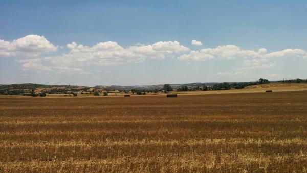21.06.2015 els camps segats  els camps segats -  Ramon Sunyer