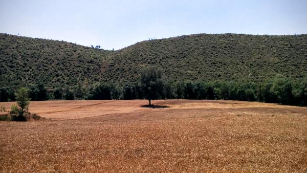 21.06.2015 camps de cereals  Puig-Arner -  Ramon Sunyer