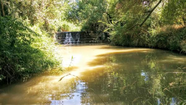 Espace fluvial  Peixera del molí del Cava - Auteur Ramon Sunyer (2015)