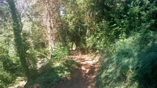 09.08.2015 camí a la font dels Dolors  Torà -  Ramon Sunyer