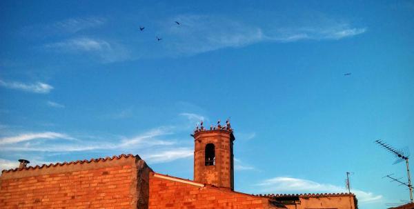 16.08.2015 Les cigonyes migren cap al sud  Torà -  Ramon Sunyer