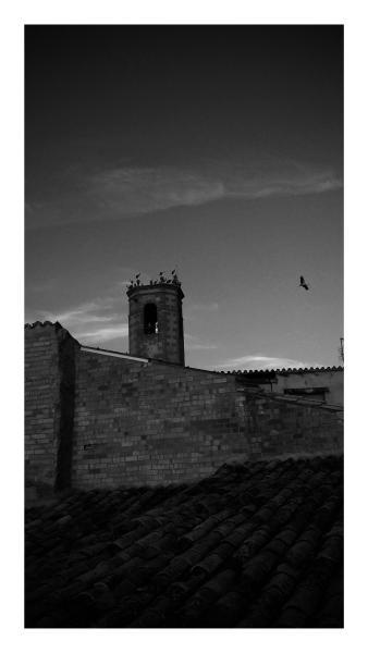 16.08.2015 El campanar un dels llocs escollits per la parada de les cigonyes  Torà -  Ramon Sunyer