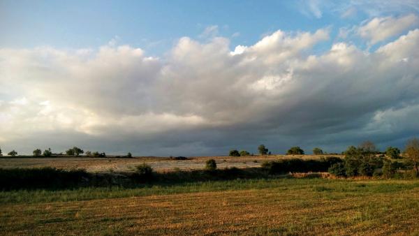 17.08.2015 Paisatge d'estiu  Vicfred -  Ramon Sunyer