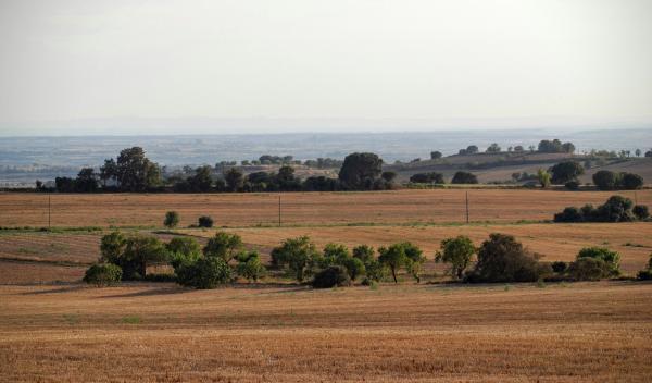 17.08.2015 Paisatge  Vicfred -  Ramon Sunyer