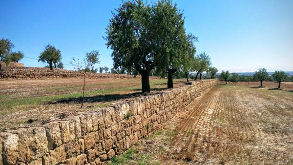 23.09.2015 Camps d'ametllers a mas Ramon  Selvanera -  Ramon Sunyer